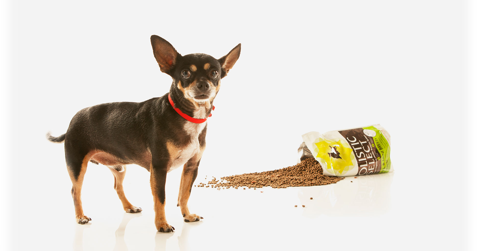 Our services natural pet food and services in albuquerque nm services solutioingenieria Image collections