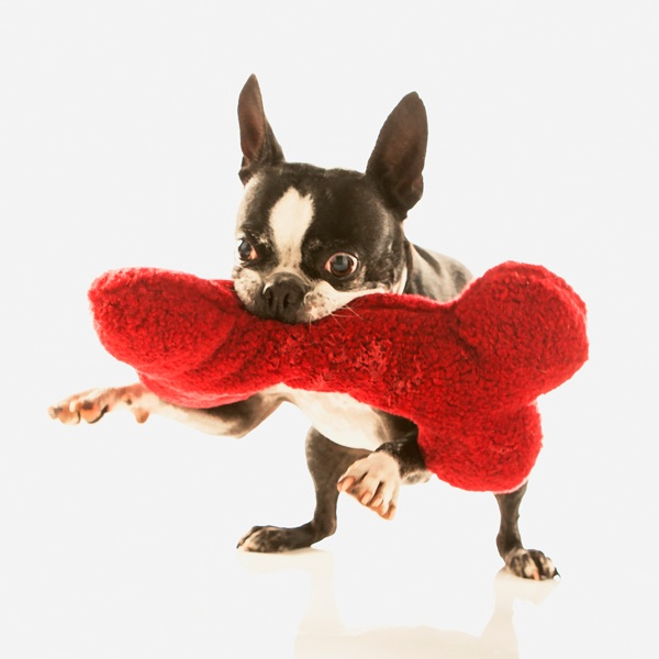 Our services natural pet food and services in albuquerque nm our services natural pet food and services in albuquerque nm pet vet market solutioingenieria Image collections